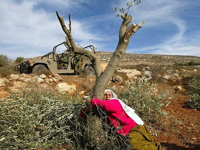 A Palestinian woman resists uprooting olive trees by the Israeli army in the West Bank. (Photo: File)
